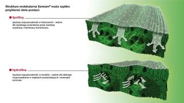 dagonis struktura molekularna xemium